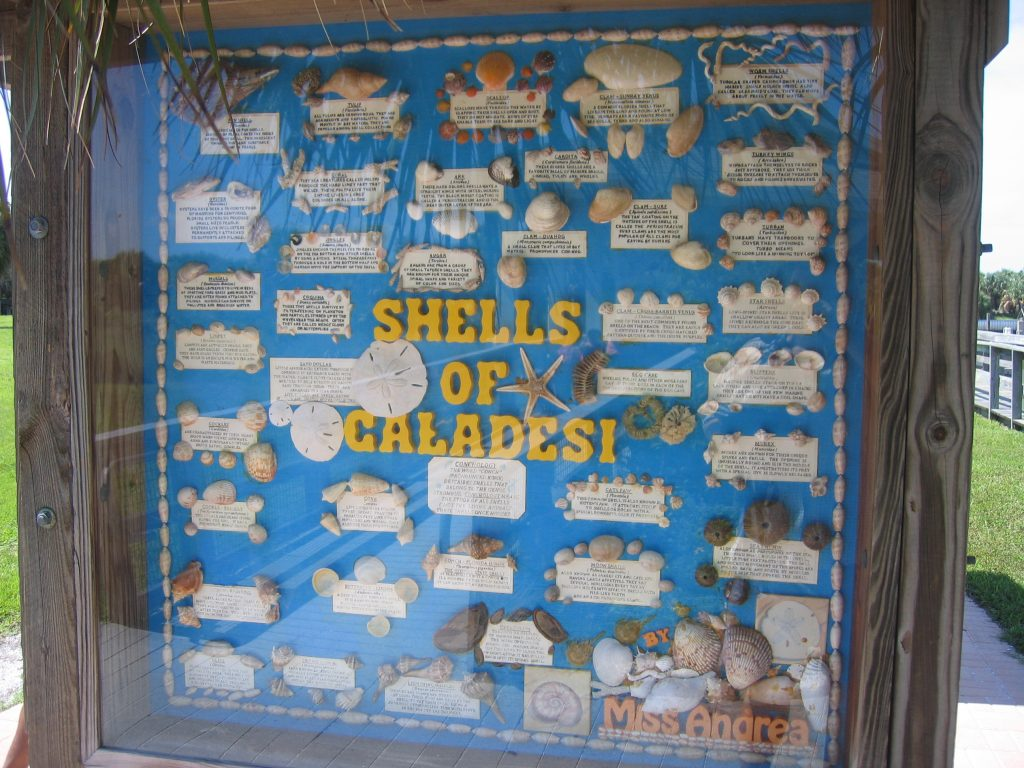 Seashells on Caladesi Island